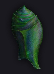 Cacoon Photoshop Painting by NicoleBarker