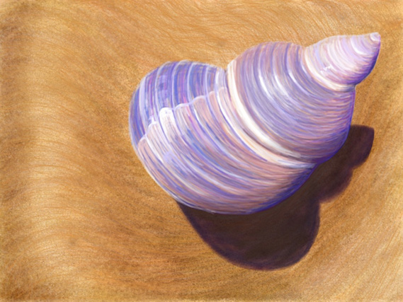 Seashell - iPad Sketch by Nicole Barker