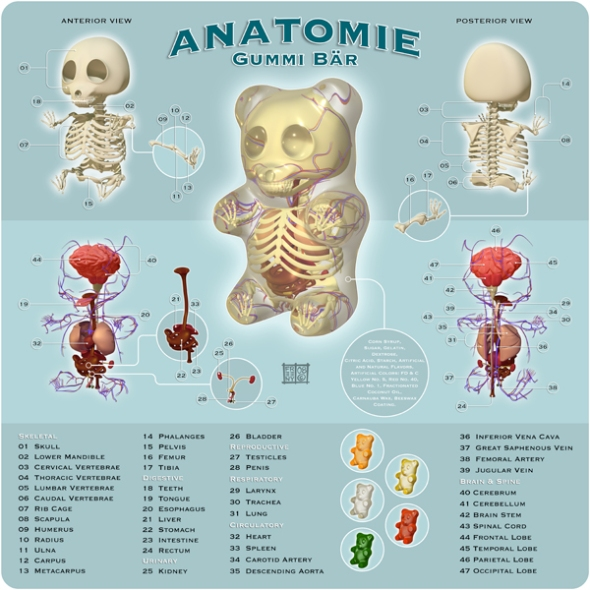 Gummi Bear Anatomy 600 by Jason Freeny