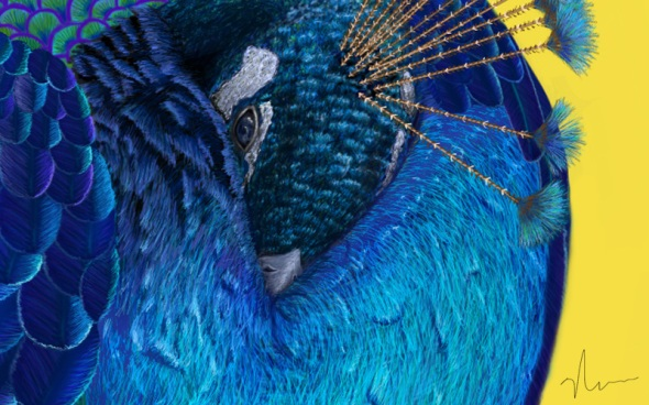 "Crop 4 - ""The Beauty That Sleeps"" - Peacock Painting by Nicole Barker"